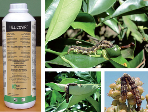 River Bioscience | Crop Protection Products | Helicovir