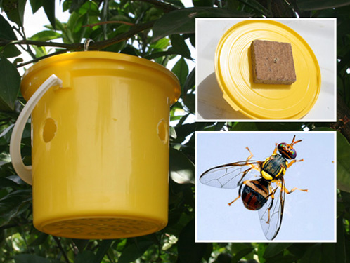 River Bioscience   Pest Monitoring Products   Invader Lure & Lynfield Trap